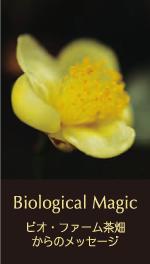 Biological Magic ビオ・ファーム茶畑からのメッセージ