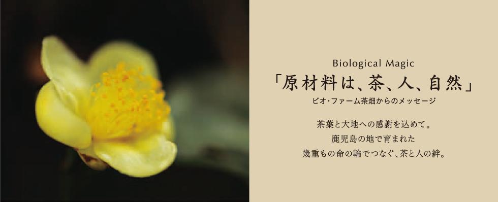 Biological Magic 「原材料は、茶、人、自然」 ビオ・ファーム茶畑からのメッセージ 茶葉と大地への感謝を込めて。鹿児島の地で育まれた幾重もの命の輪でつなぐ、茶と人の絆。